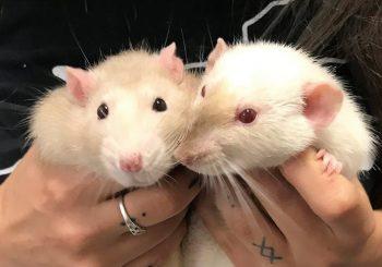 Pudge & Felix