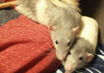 Riley (neutered) & Chip
